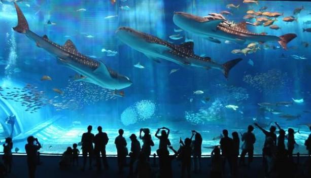 Aquarium of Barcelona